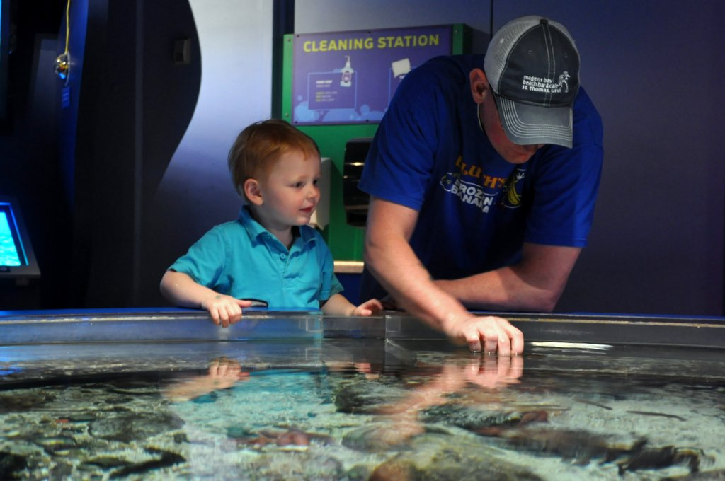 touch tank at mystic aquarium