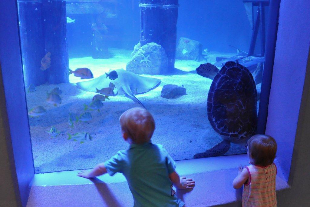 kids at mystic aquarium