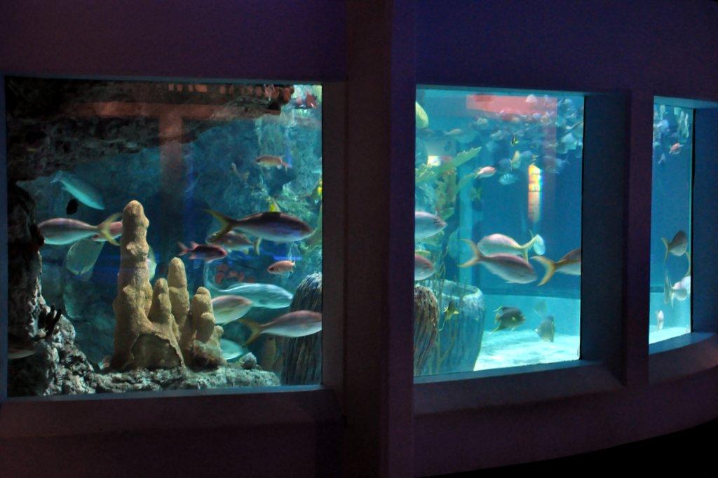 mystic aquarium fish tank