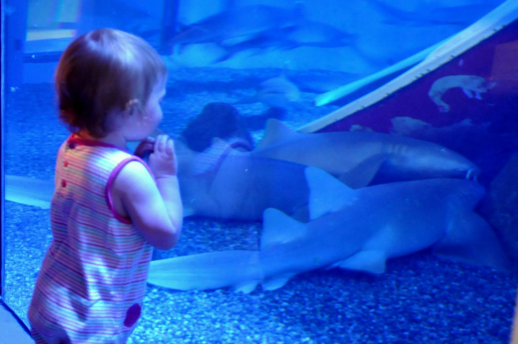 baby watching the sharks at mystic aquarium