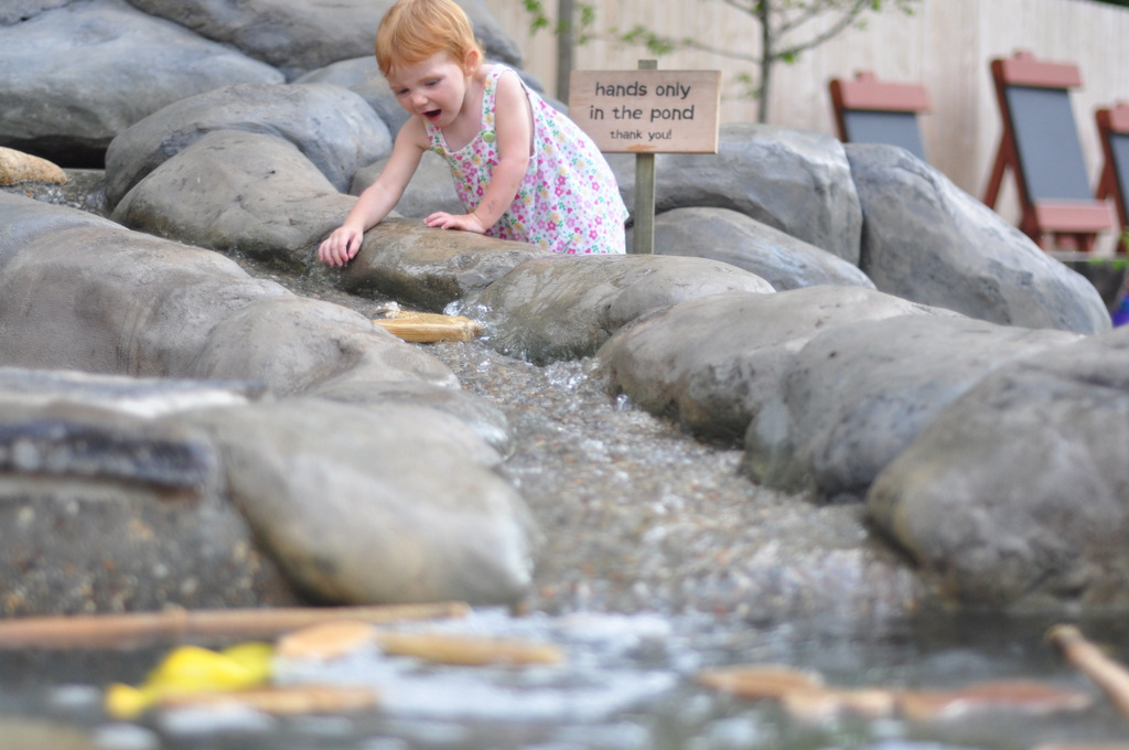 Hasbro big back yard roger williams park zoo