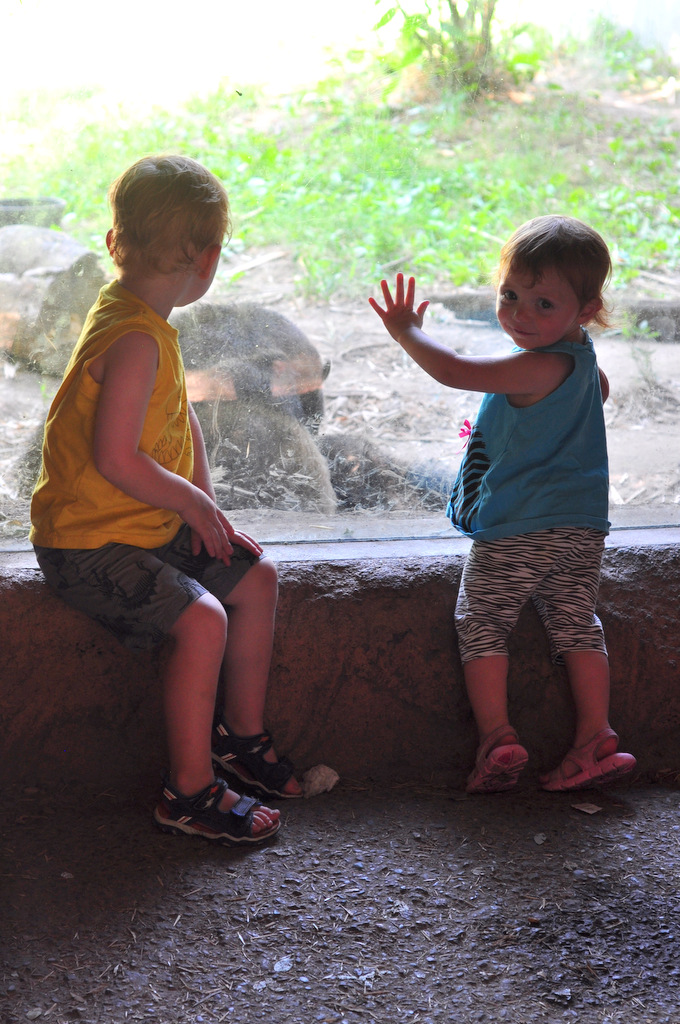 the 5 best memberships for families in southeastern connecticut roger williams park zoo
