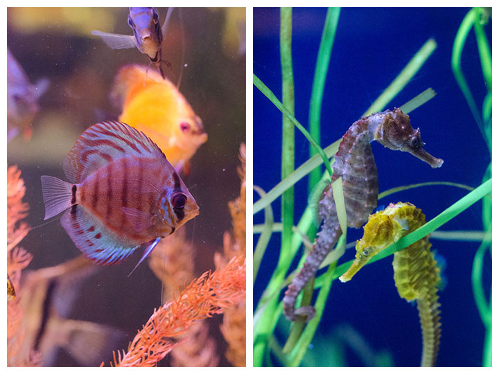 aquarium side by side 2
