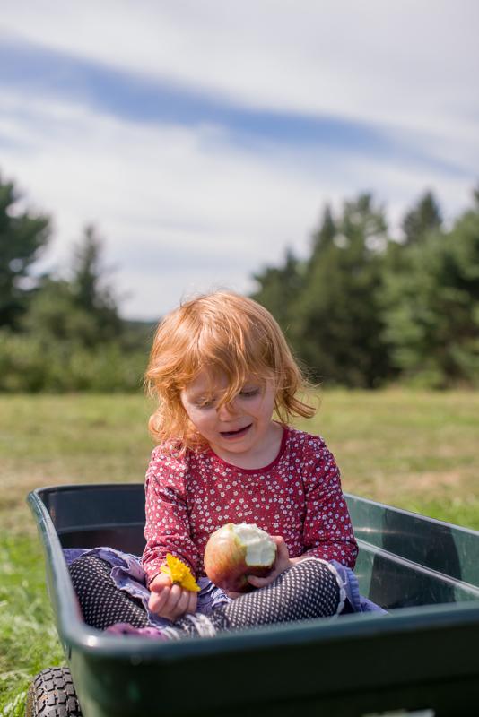 apple picking-28