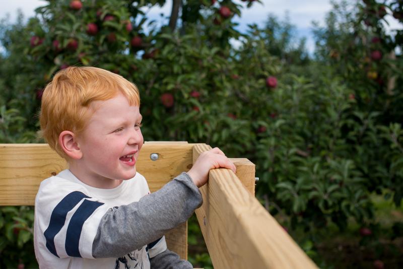 apple picking-39