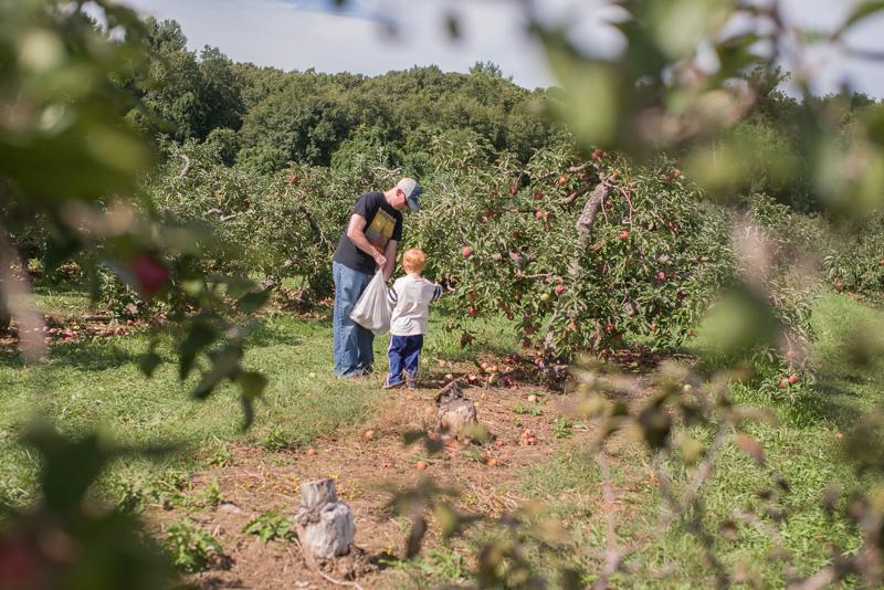 apple picking-5