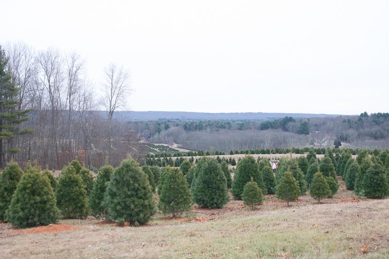 christmas 2013-6