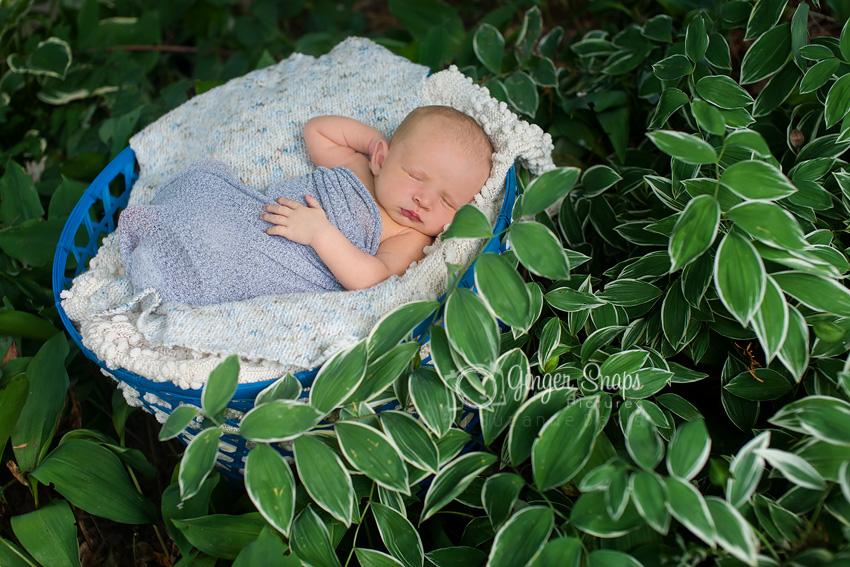 newborn garden web 3