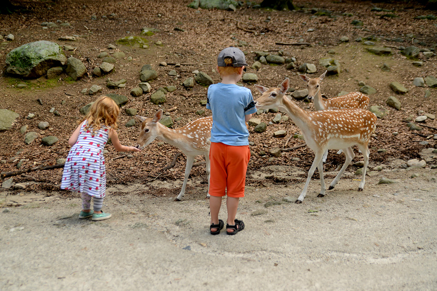 southwick zoo-26