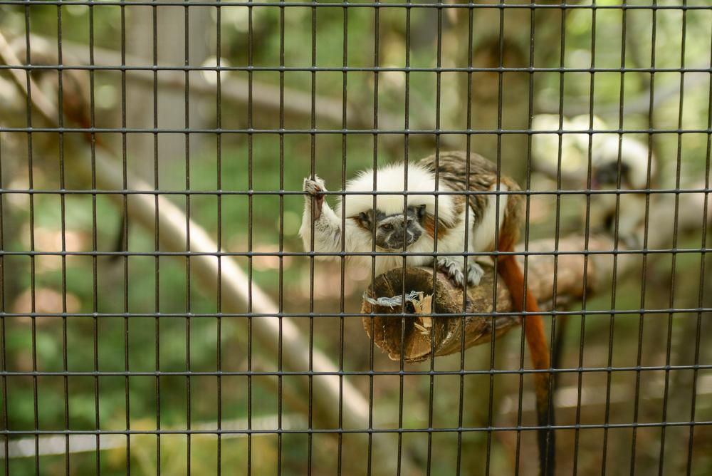 southwick zoo resize-12