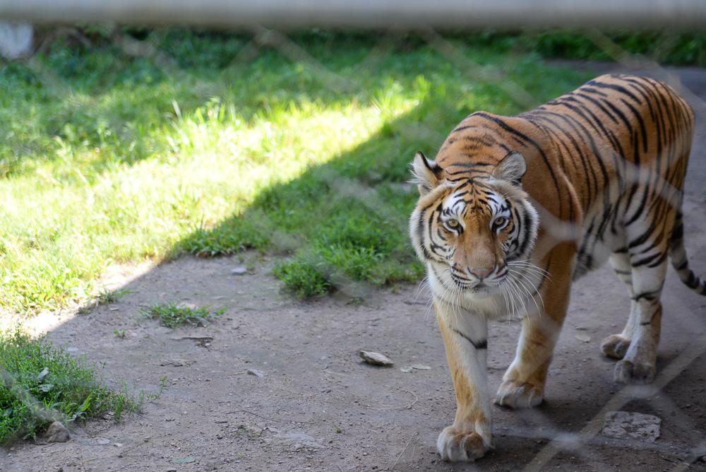 southwick zoo resize-2