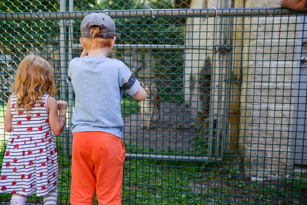 southwick zoo resize-3