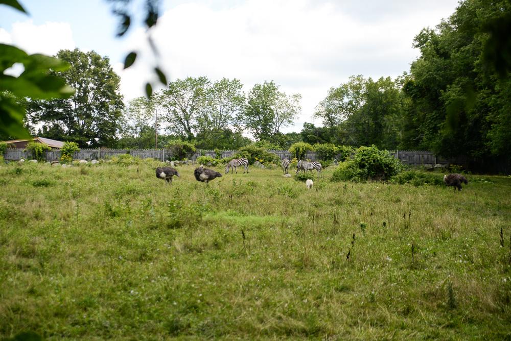 southwick zoo resize-58