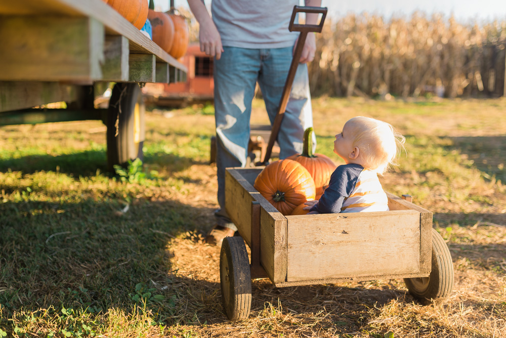 buttonwoods farm corn maze 2015-100