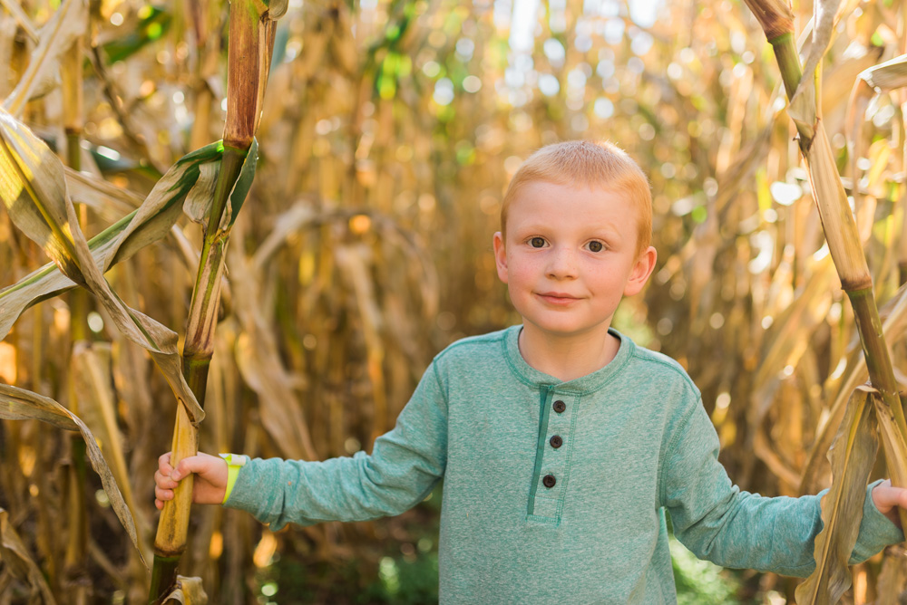 buttonwoods farm corn maze 2015-11