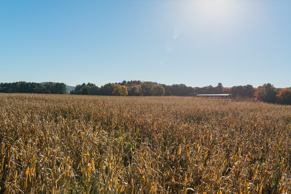 buttonwoods farm corn maze 2015-16