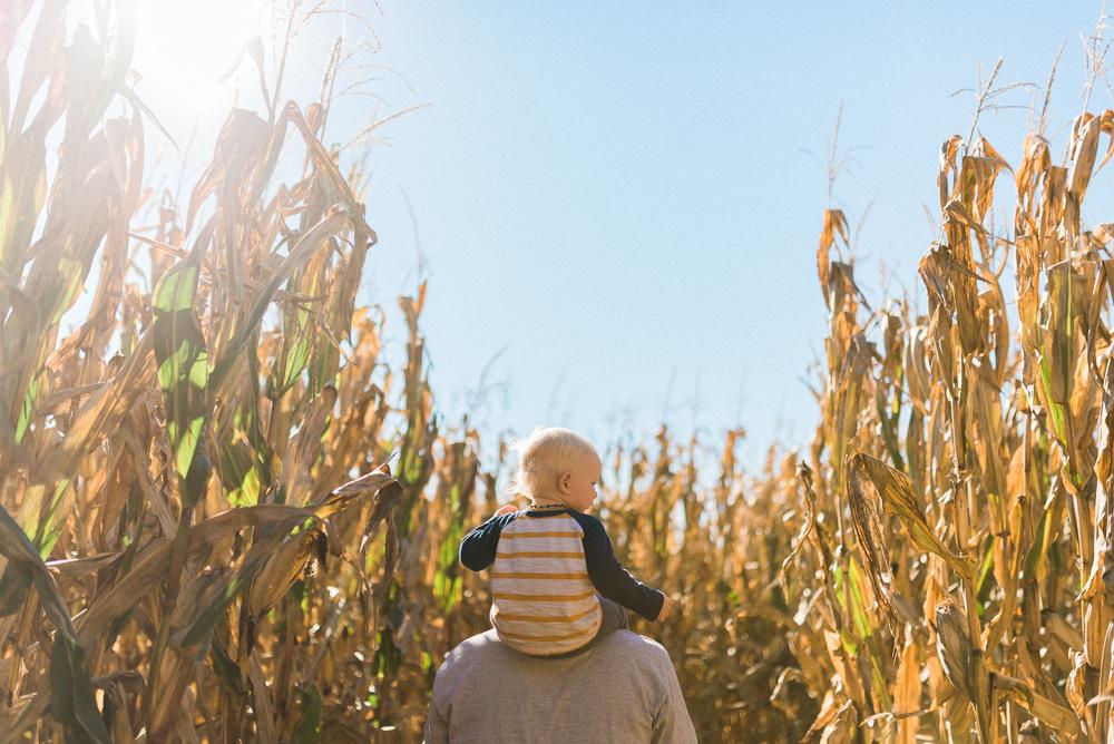 buttonwoods farm corn maze 2015-2