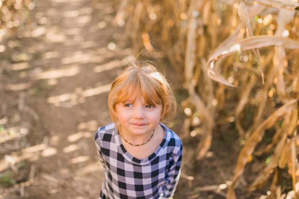 buttonwoods farm corn maze 2015-3
