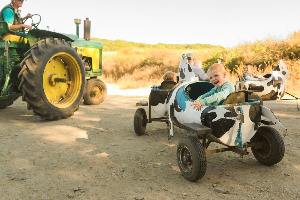 buttonwoods farm corn maze 2015-31
