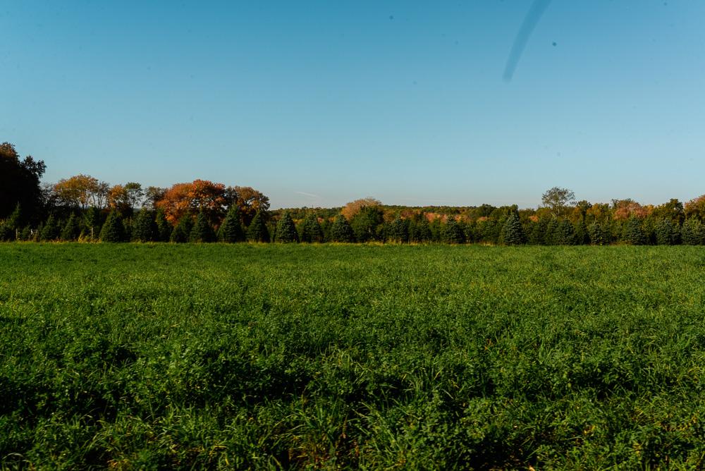 buttonwoods farm corn maze 2015-33