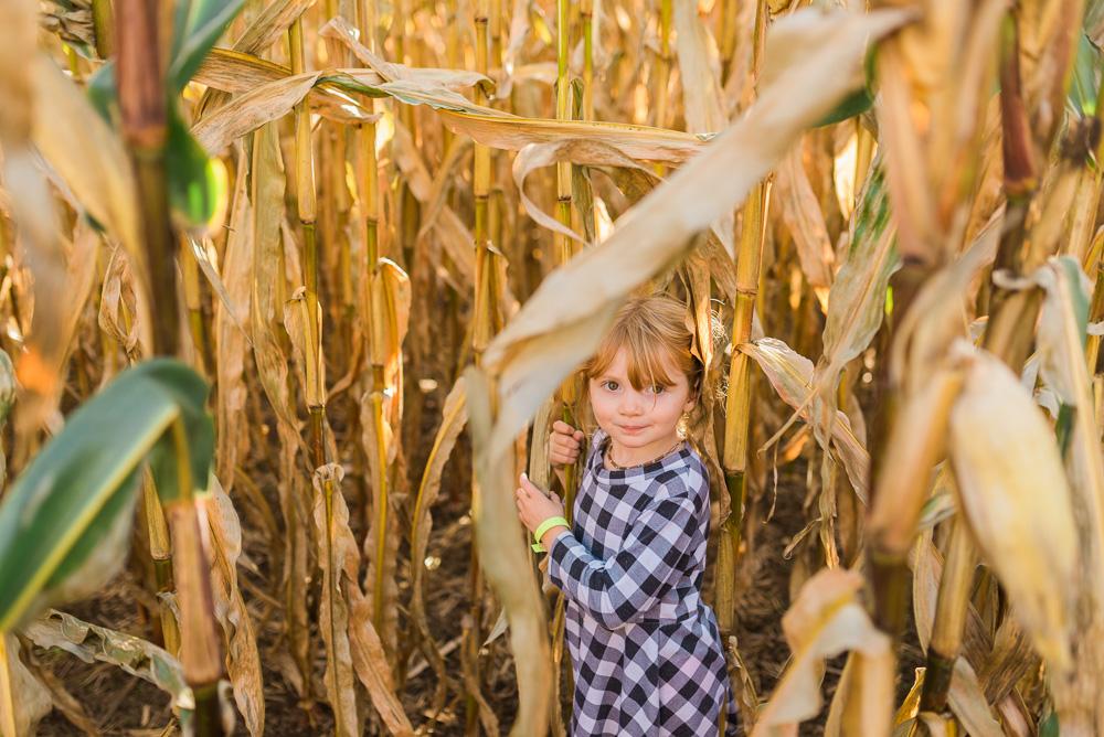 buttonwoods farm corn maze 2015-35