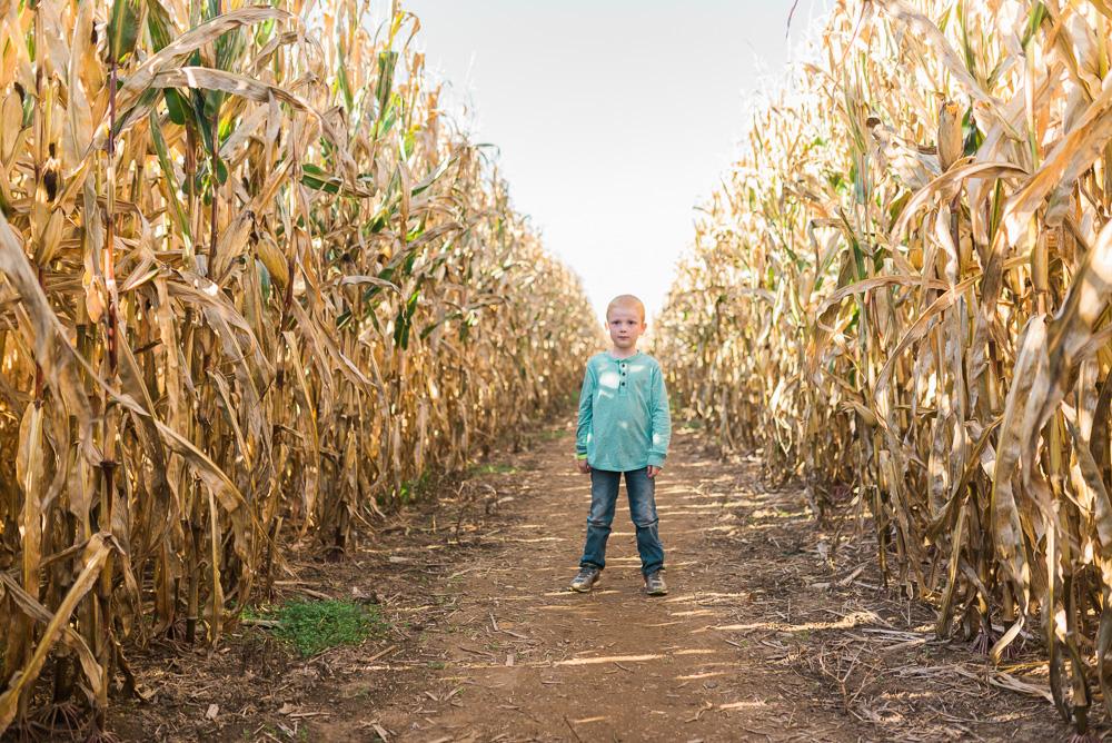 buttonwoods farm corn maze 2015-36