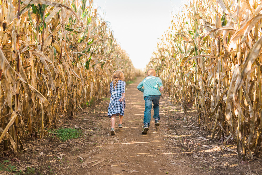 buttonwoods farm corn maze 2015-39