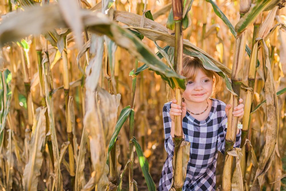 buttonwoods farm corn maze 2015-47