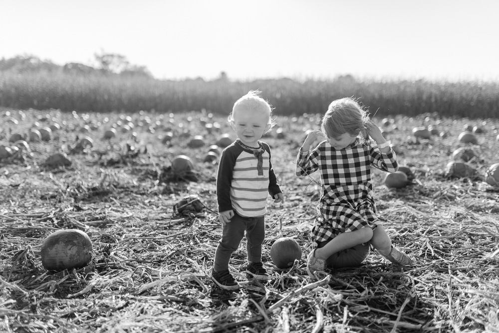 buttonwoods farm corn maze 2015-59