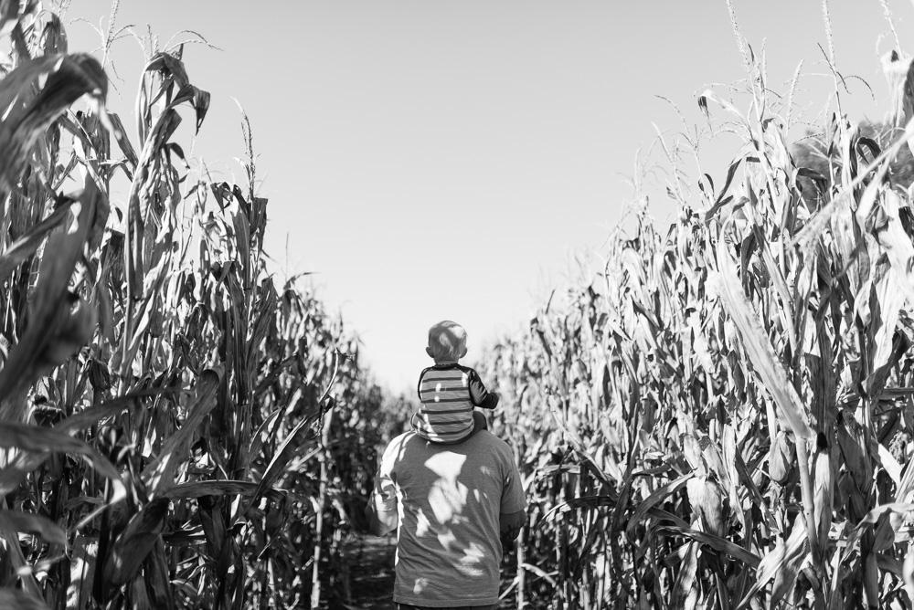 buttonwoods farm corn maze 2015-6
