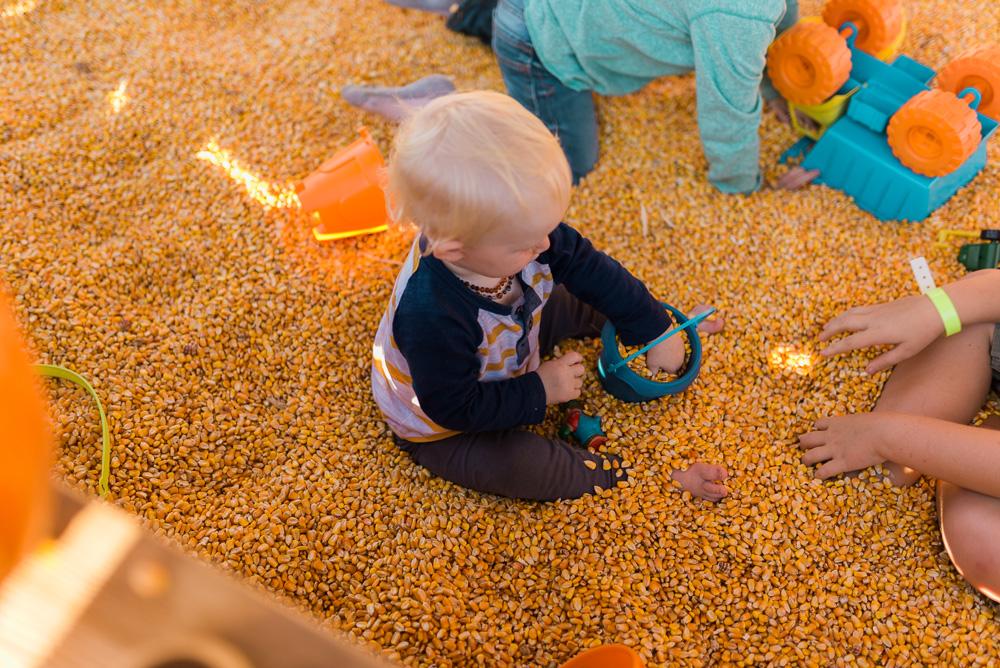 buttonwoods farm corn maze 2015-71