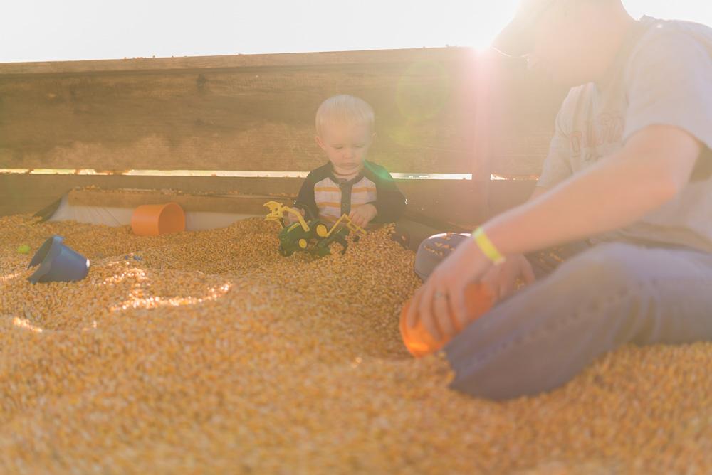 buttonwoods farm corn maze 2015-75