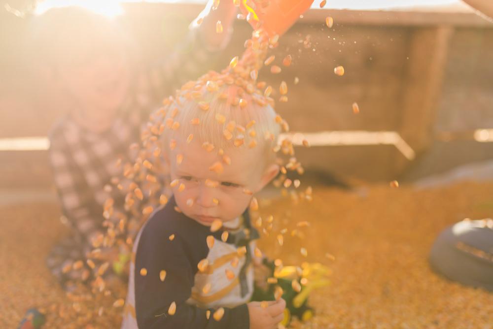 buttonwoods farm corn maze 2015-79