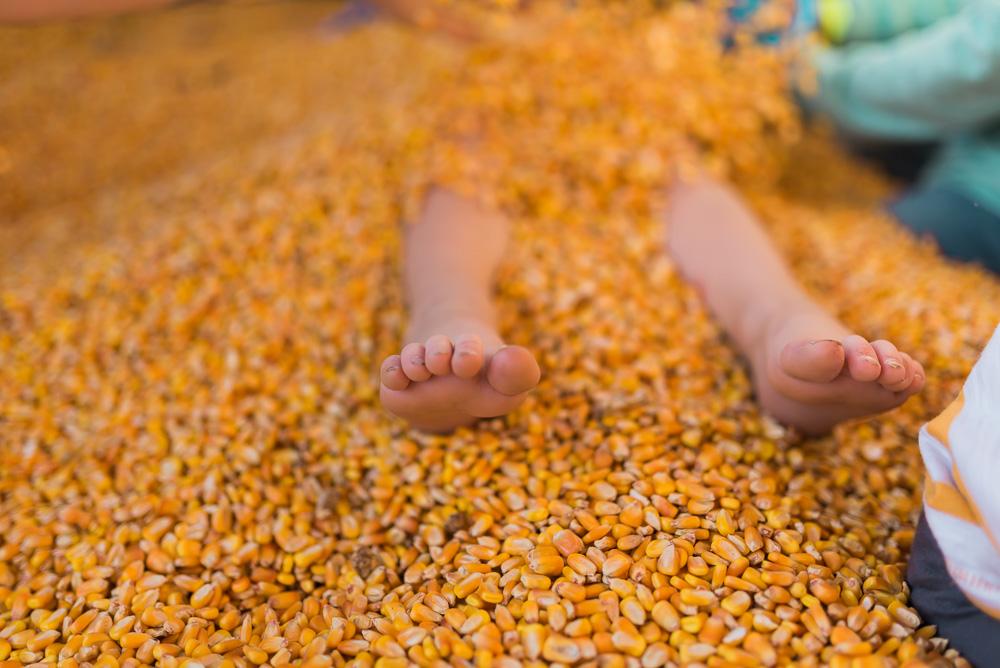 buttonwoods farm corn maze 2015-80