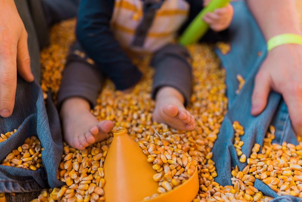 buttonwoods farm corn maze 2015-83