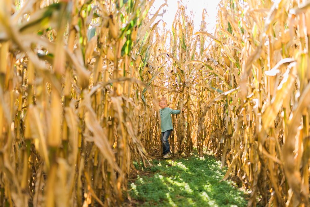 buttonwoods farm corn maze 2015-9