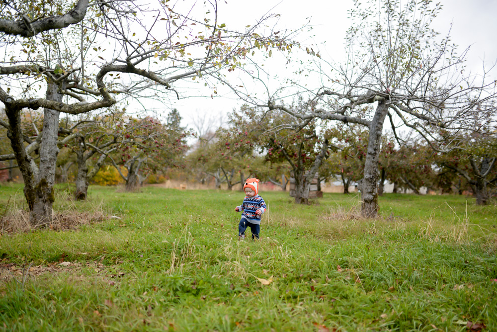 apple picking 2015-13