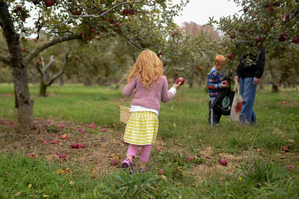 apple picking 2015-2