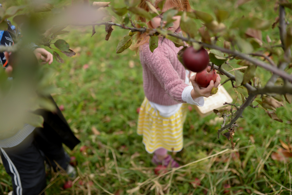 apple picking 2015-5