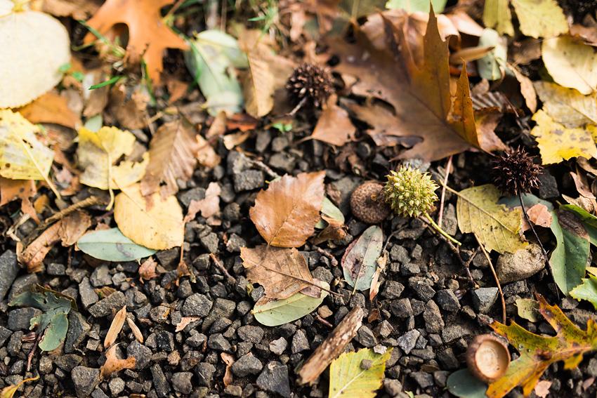 linc arboretum RAW-14