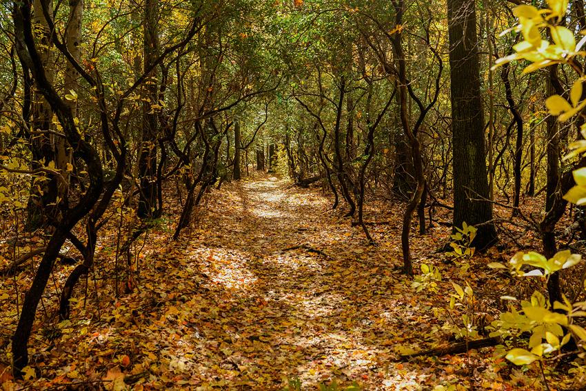 linc arboretum jpg-23
