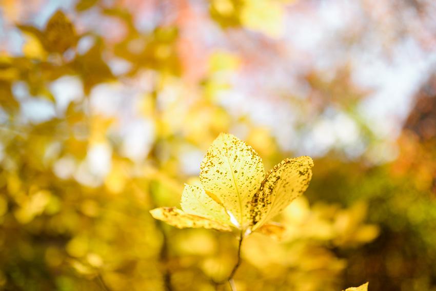 linc arboretum jpg-26