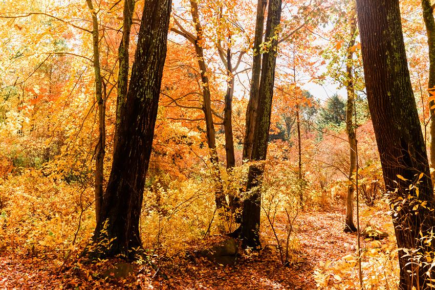 linc arboretum jpg-4