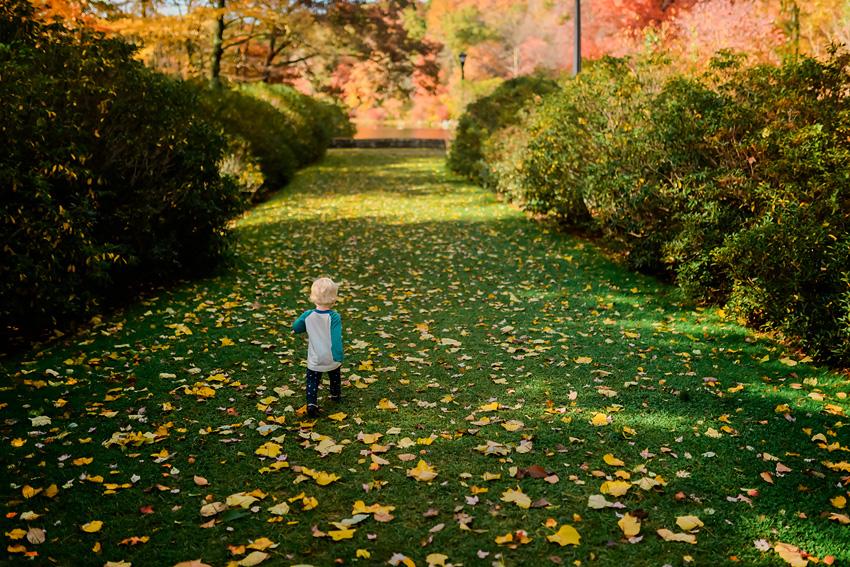 linc arboretum jpg