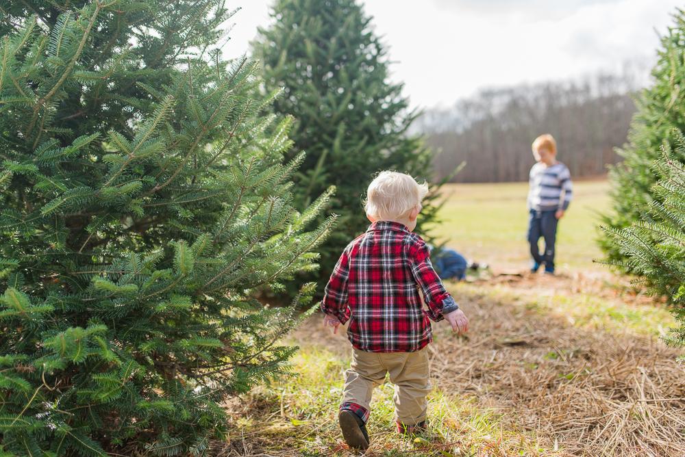 christmas tree-12