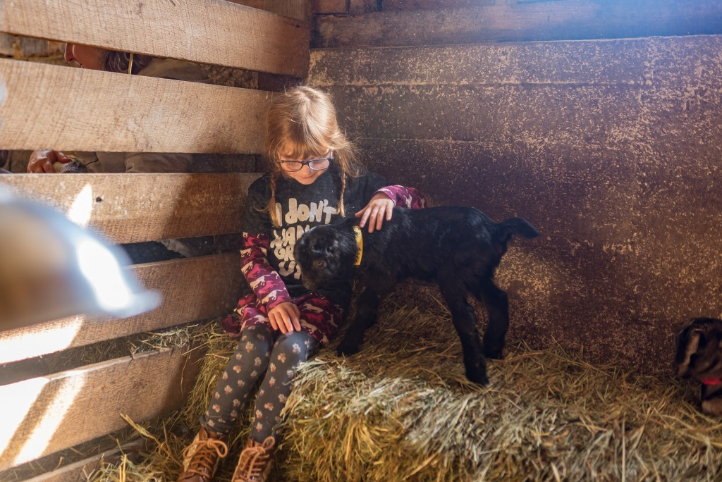 oak leaf dairy goat farm march 6th-19