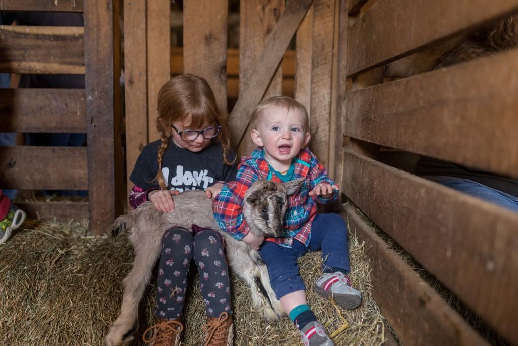 oak leaf dairy goat farm march 6th-22