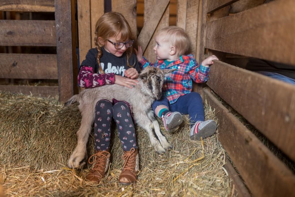 oak leaf dairy goat farm march 6th-23