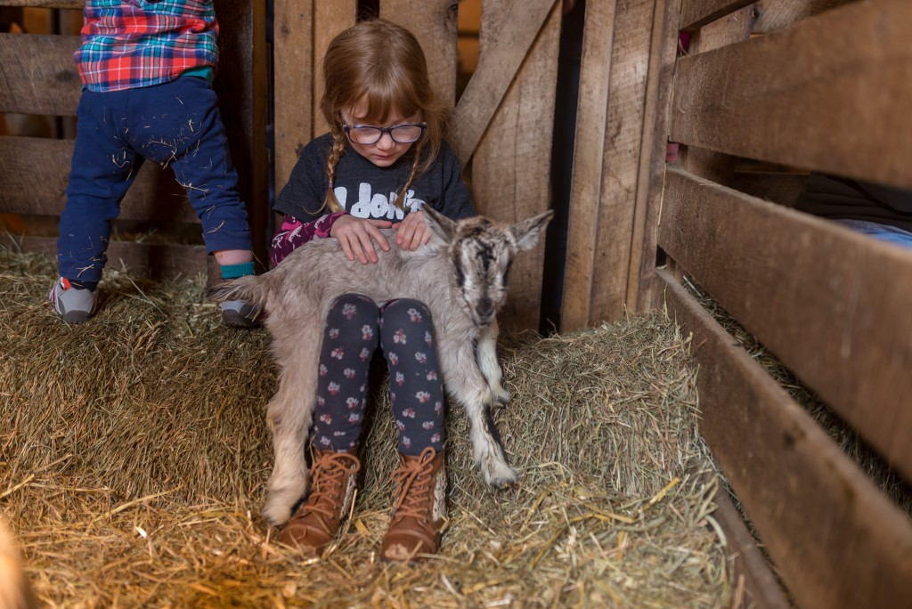 oak leaf dairy goat farm march 6th-26