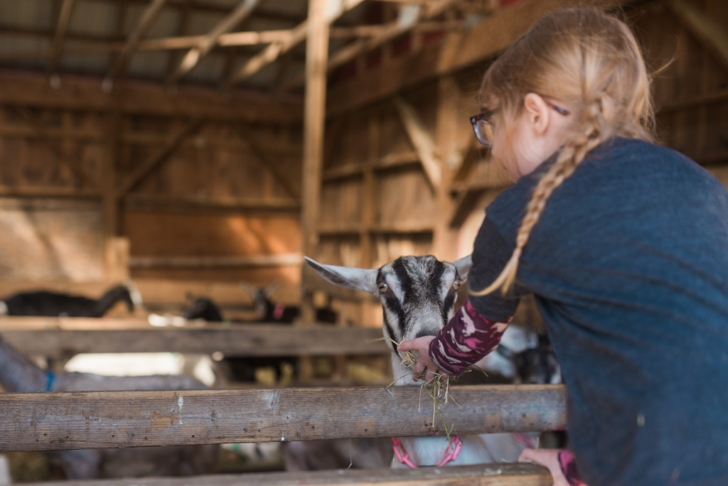 oak leaf dairy goat farm march 6th-31